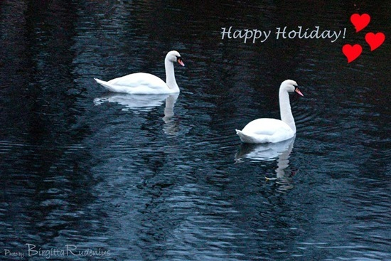 water_20101118_G9_swans