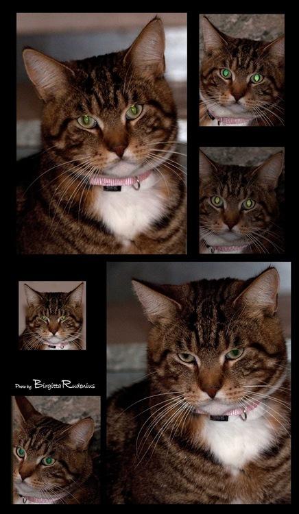 katt_mans