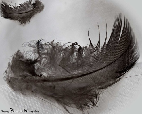 17_2011_feathers