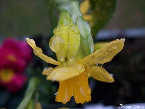 blommor_20110207_balkong3