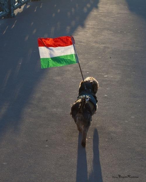 hu_20110115_flagga