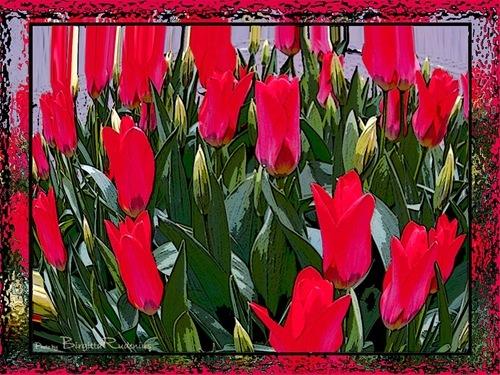 pm_20110405_tulips