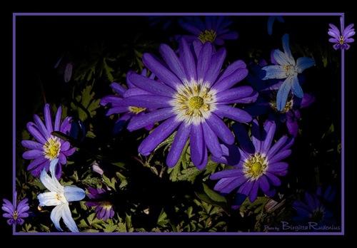pm_20110409_blues