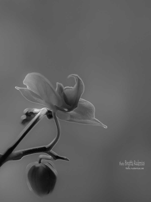 pm_20110503_orkide_bw1