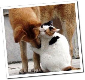 Amor animal (11)