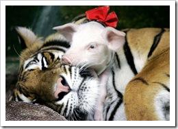 Amor animal (17)