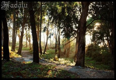 Hadalu_bosquesdehadas19