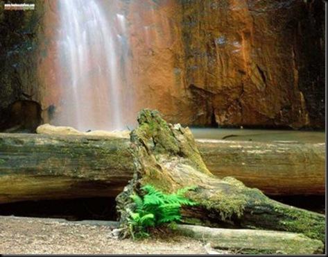 ELTALLERDELABRUJAMAR_Berry Creek Falls