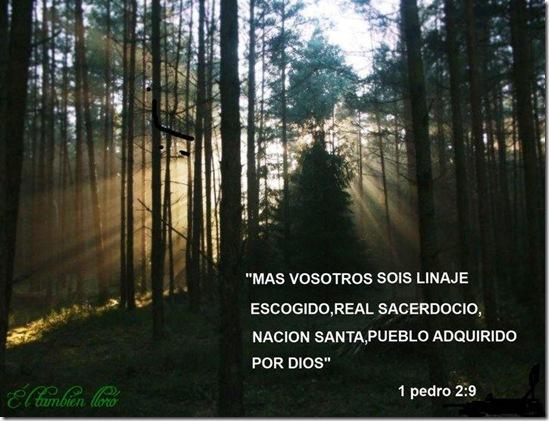 ElTambienLloro_11tarjetascristianas10