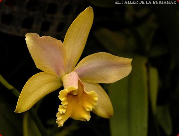 FloresAmarillas-ElTallerdeLaBrujaMar0507