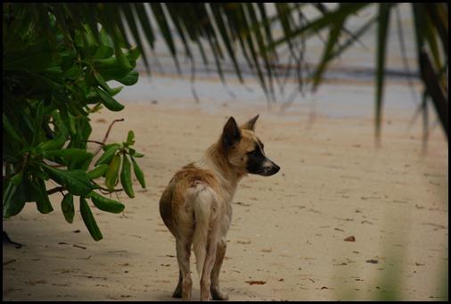 Mapia  Dog