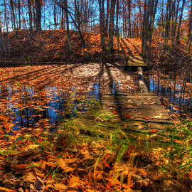 Forest Pond by Marilyn Magnuson - Landscapes Forests ( blue reflection, long shadows, fall leaves, blue sky, tree trunks, fall pond, leaves on pond )