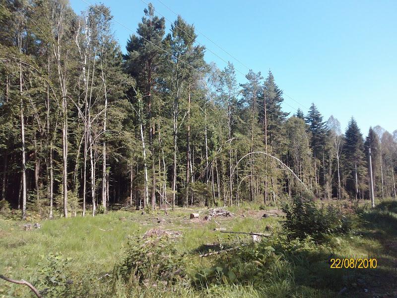 Аномальні дерева