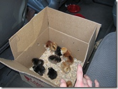 new chicks 01