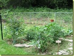garden progress 02