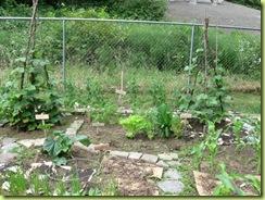 garden progress 04