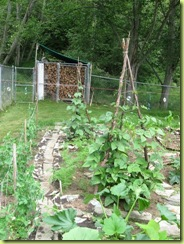 garden progress 07