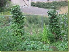 Big garden 05