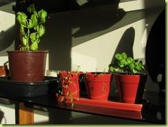 living room garden 04