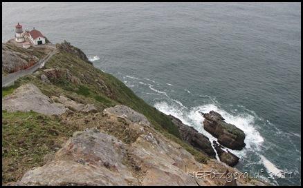 IMG_5908GullsOn RocksAtPointReyes Lighthouse