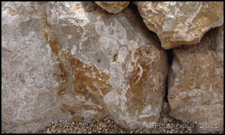 ChertNodules_In_Kaibab Limestone