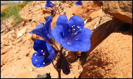 IMG_6347SouthernUtahRoadside Flower