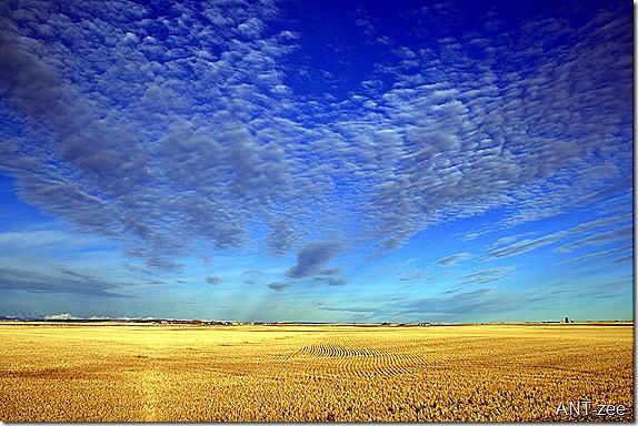 Cayley Alberta