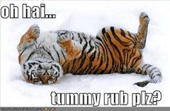 Tiger Tummy Rub