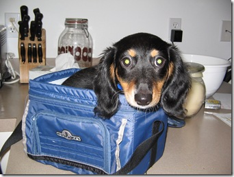 hot dog in a lunch box