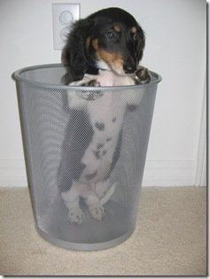 puppy in a can
