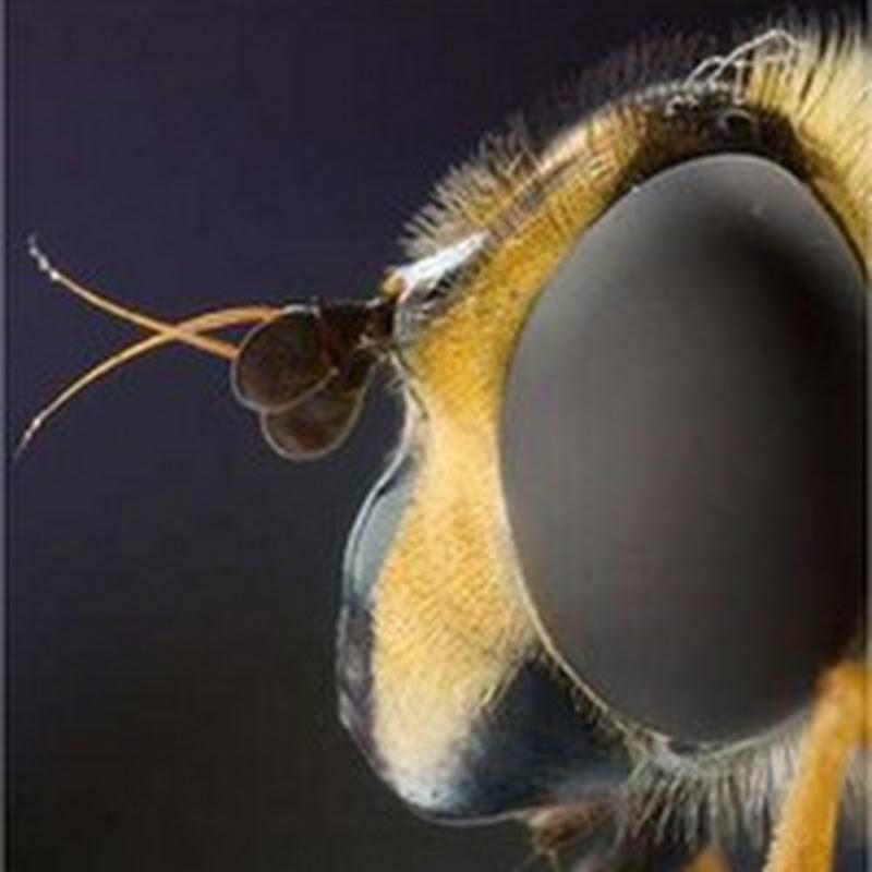 16 aterradoras fotografías macro de insectos