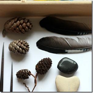 natura in scatola-7