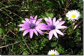 violette-9