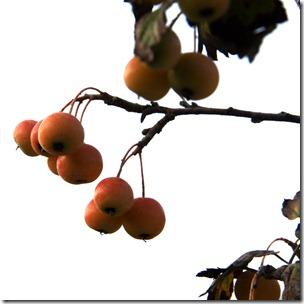 rosso aranc-7