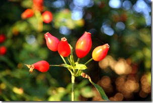 rosso aranc-31