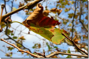 selva d'autunno-5