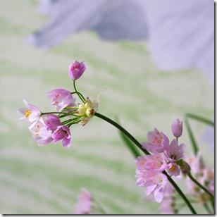 Reggi fiori