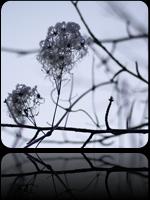 photo-nature02