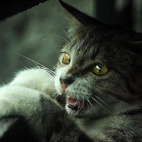 by 3 Joko - Animals - Cats Portraits