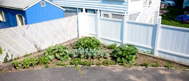 garden -8459