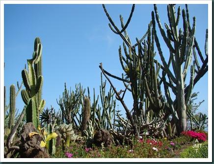 DSC03360-cactusBW