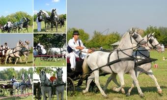 Zobraziť fotoalbum Súťaž pestovateľov koní (2006) Petrovec, Báčka, Vojvodina, Srbsko