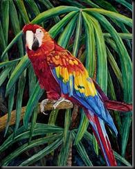 Proud Parrot