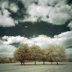 infraredphotography9.jpg