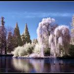 infraredphotography13.jpg