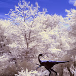 infraredphotography14.jpg