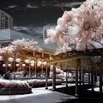 infraredphotography22.jpg