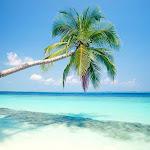 Beach-Palm-Tree-2-NGZF4DCDKI-1024x768.jpg