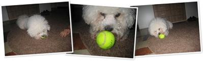 Benno und der Tennisball N°1 anzeigen