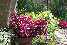 Combining Plants for Florida Gardens